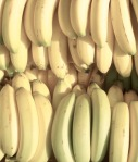 BananeSxc-450[1]