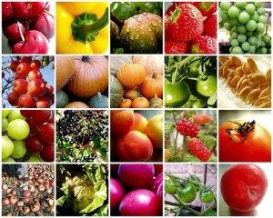 10-regole-per-un-alimentazione-salutare_3563[1]